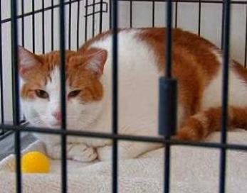 Ini-Cara-Tepat-Merawat-dan-Membersihkan-Kandang-Kucing