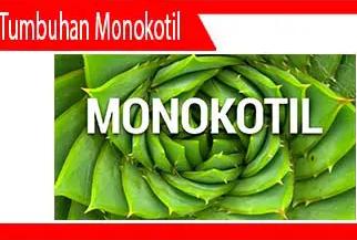 Contoh-tumbuhan-monokotil-Pengertian-Sifat-Struktur-Jenis